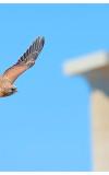 Lindos, a non-birding break