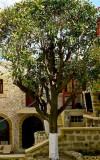 Modern Living in Rhodes Medieval City